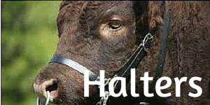 Halters